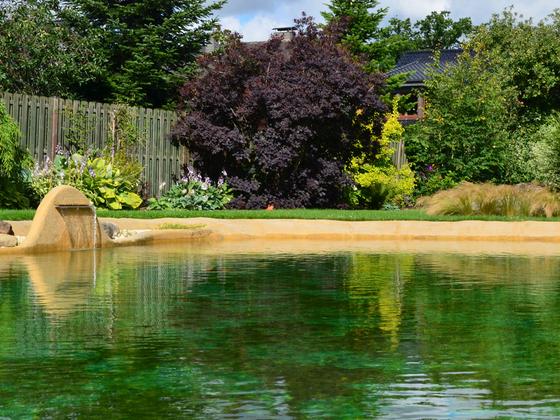 Gartenlagune aus Schwimmersicht