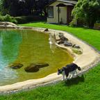 Gartenlagune als großer Schwimm- und Koiteich